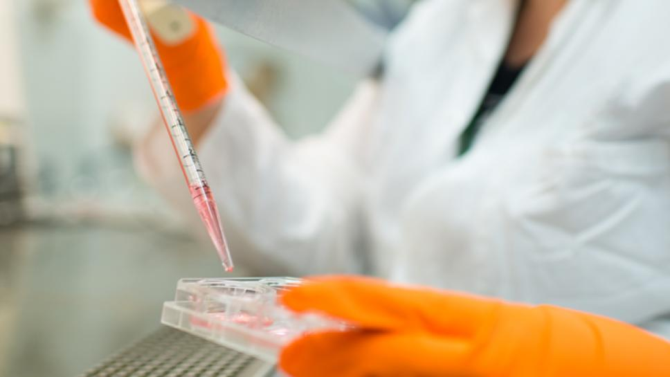 A scientist working in a lab holding a pipet above a petri dish